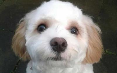 Max had ear surgery