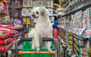 dog in trolley
