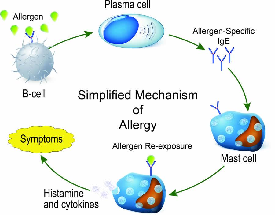Mechanism of allergies in dogs